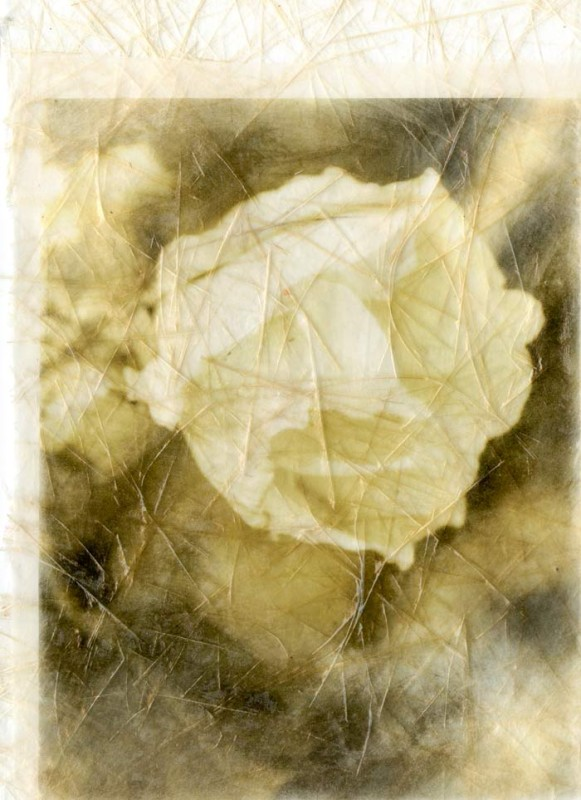 Gampi paper on rice paper