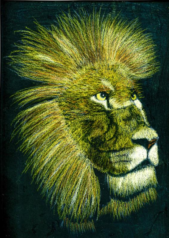 Lion Sketch On Black Paper