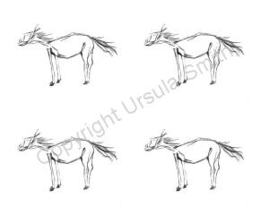 Whimsy Horse A2 Card Fronts