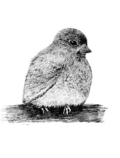 Bird Pencil A2 Digital Stamp